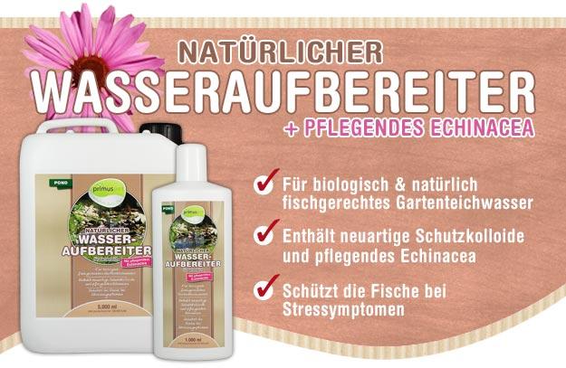 Natürlicher Wasseraufbereiter mit Echinacea für Ihren Gartenteich